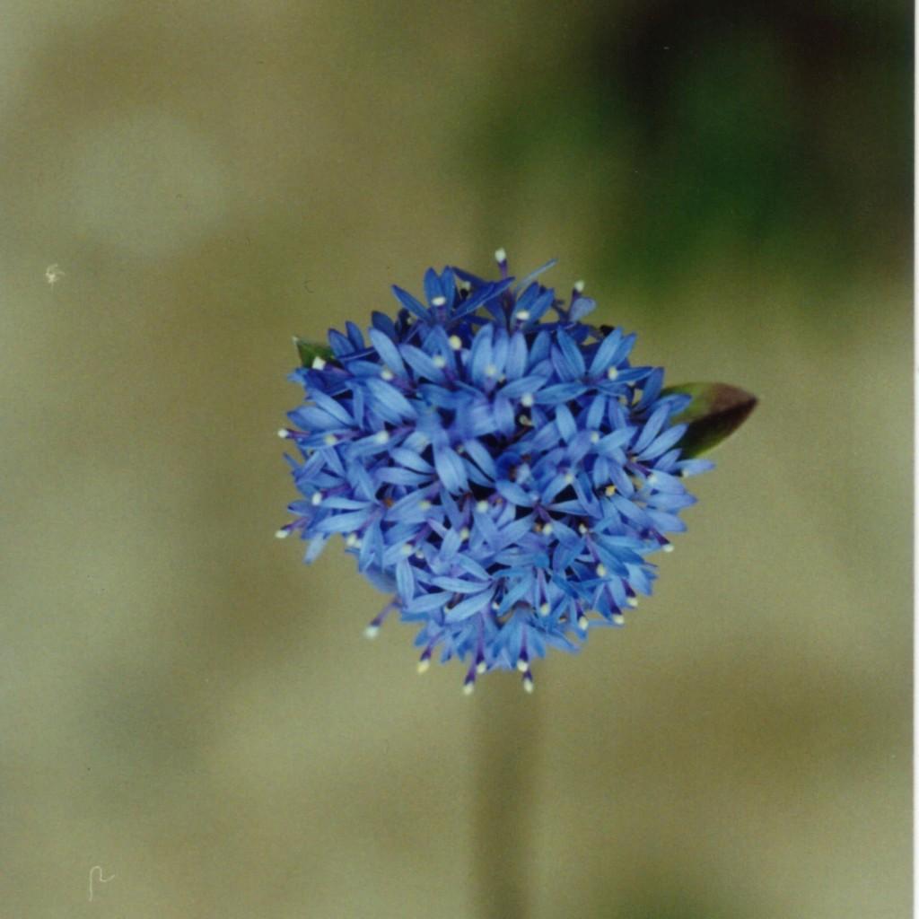 Web-flora