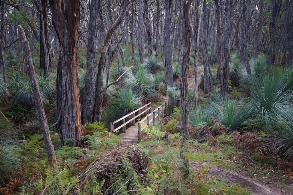 Stringybark walk, Deep Creek Conservation Park
