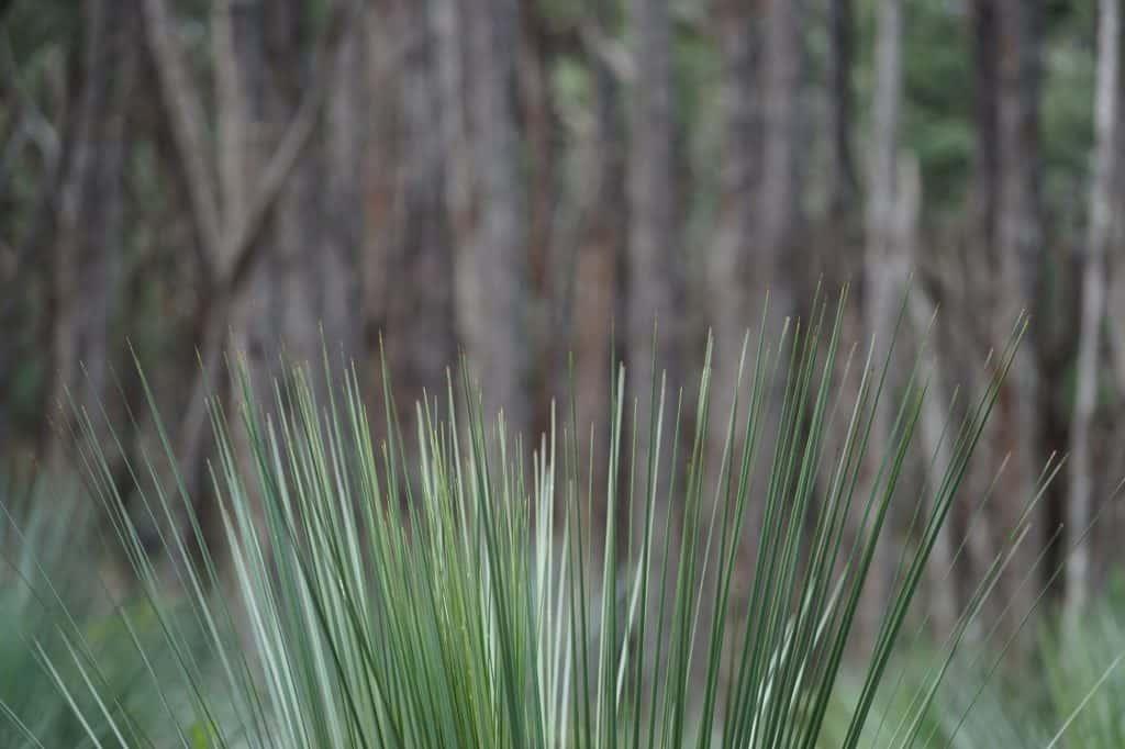 Stringybark forest, Deep Creek Conservation Park