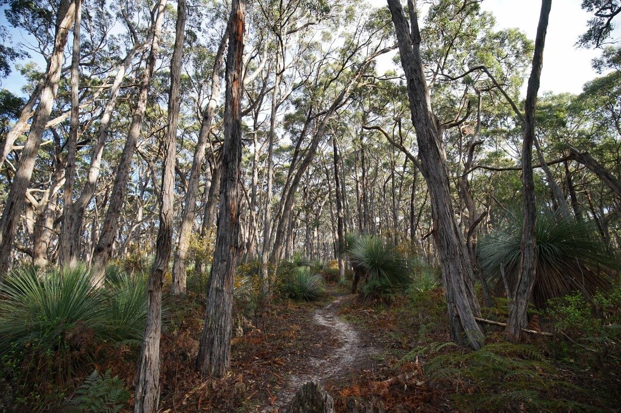 Stringybark Forest Trail Deep Creek Conservation Park