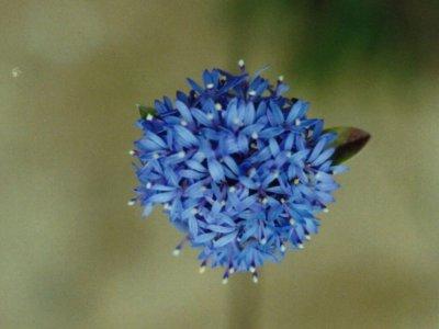 Web-flora1-1024x1024